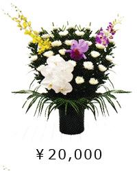 日本の伝統美 白菊